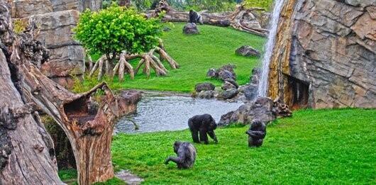 Bioparc Valencia - Pérgola de los gorilas