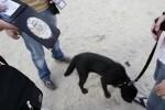 policias-perros.jpg