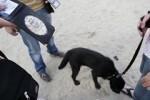 policias-perros_thumb.jpg