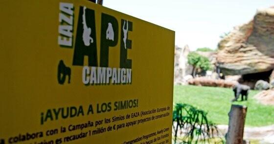 Ayuda-a-los-Simios-Bioparc-Valencia