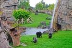 africa-ecuatorial-Bioparc-Valencia-2011-simios