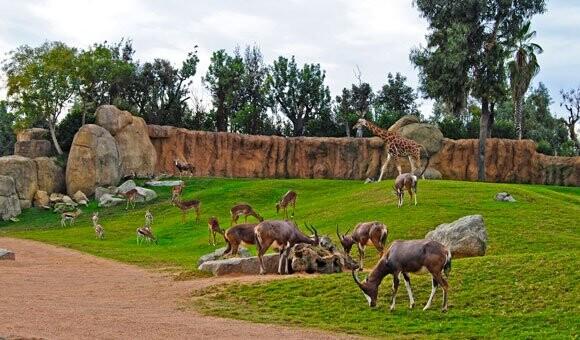 Bioparc Valencia - Sabana Africana