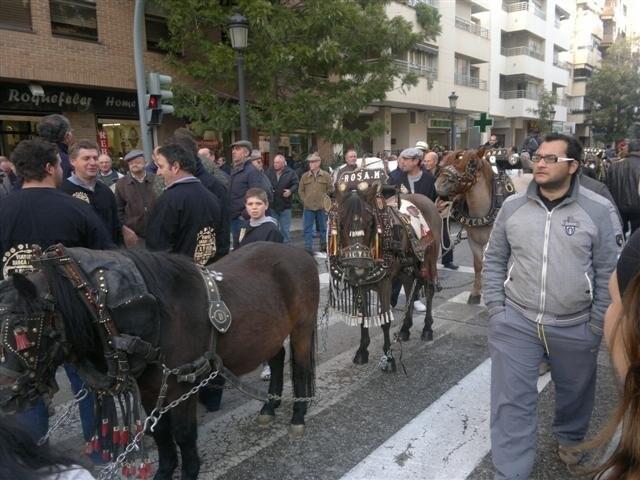 San antonio abad 2012 (2)