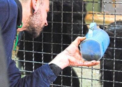 Calditos calientes para los chimpancés en el cobijo de Bioparc