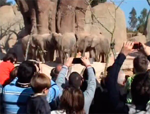 Los elefantes del Bioparc celebran el 4º aniversario