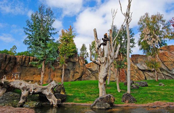 Primavera-2012---el-joven-Kabuli---gorila---Bioparc-Valencia