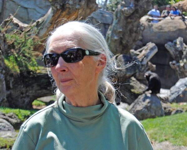 Jane Goodall - visitando el bosque ecuatorial de Bioparc Valencia