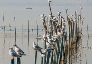 Grupo de aves en el lago de La Albufera