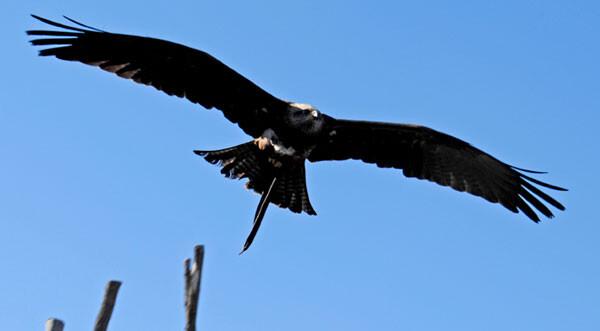 Bioparc Valencia celebra el Día de las Aves Migratorias
