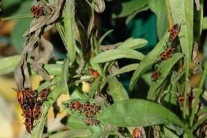 Cómo controlar las plagas en el jardín