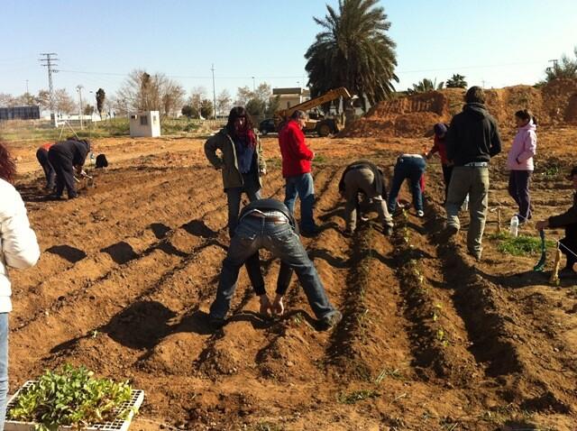Otro grupo de vecinos labra el campo que se dedicará a huerto urbano