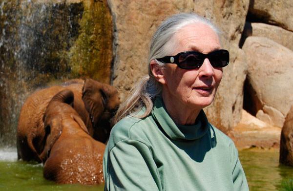 Jane Goodall en Bioparc Valencia, mayo de 2012