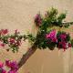 Plantas trepadoras