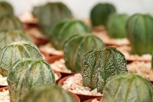 Qué cuidados necesitan los cactus