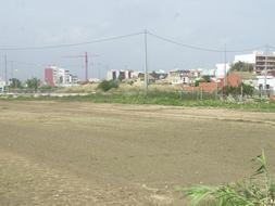 Terrenos de la pedanía de Pinedo