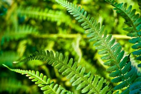 plantas-que-purifican-el-ambiente