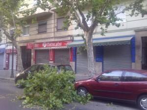 La rama cayó en el espacio existente entre los dos coches aparcados en Micer Mascó/vlcciudad