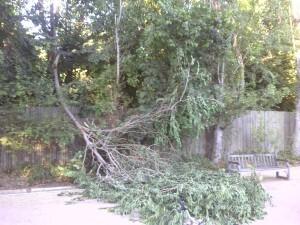 La rama que cayó ayer en el Parque de Marxalenes/vlcciudad