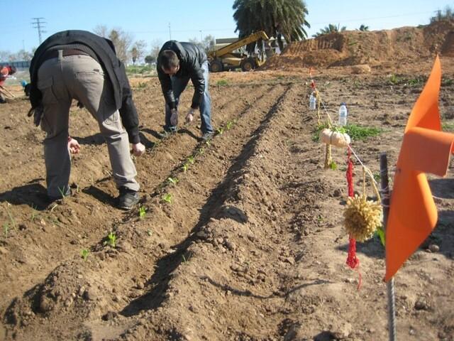 Un grupo de personas labra la tierra de los huertos urbanos de Benimaclet