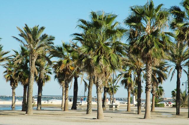 Grupo de palmeras en el paseo marítimo de la ciudad