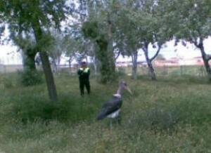 Un agente intenta atrapar un ave/plv