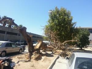 Los restos del árbol no dañaron a ningún vehículo ni persona por tener lugar de noche/vlcciudad