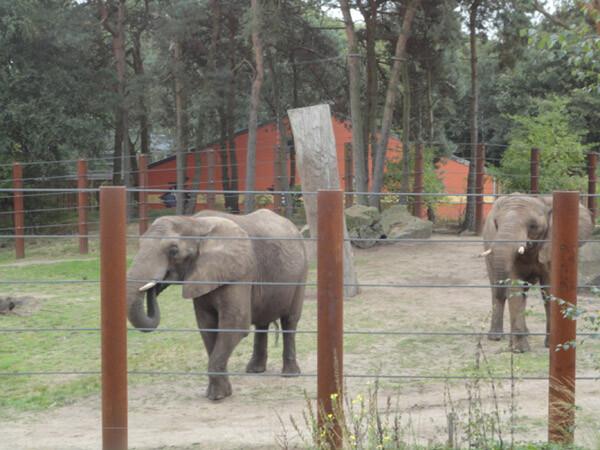 Greta y Betty, elefantas del Bioparc Valencia, se encuentran en su nuevo hogar de Holanda