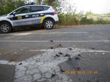 Una unidad de la patrulla verde en agosto recogiendo cangrejos en la carretera Nazaret-Oliva/plv