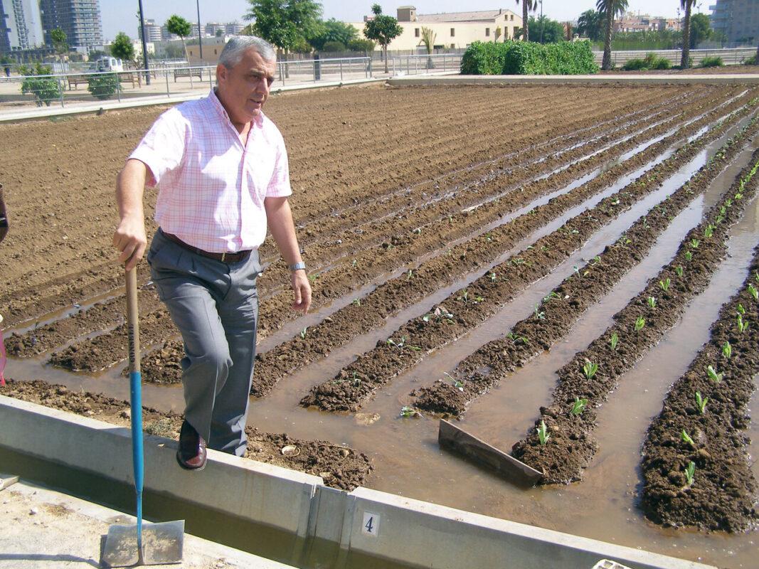 El concejal y vicepresidente del Consell Agrari ésta mañana en un de los huertos conuna azada regando/ayto. vlc