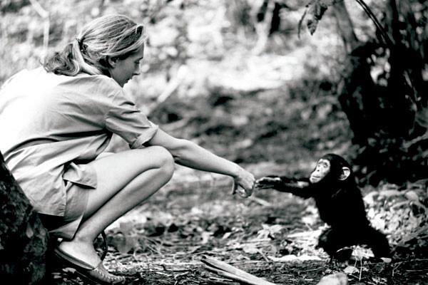 Jane Goodall en su juventud juega con un pequeño chimpancé
