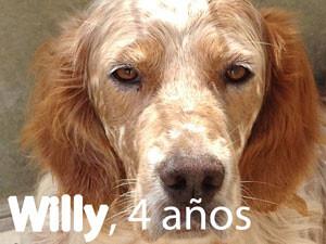 Willy, uno de los perros del desfile solidario de perros de Bioparc y AUPA