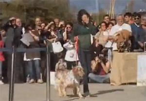 50 perros abandonados de la asociación A.U.P.A. desfilan en Bioparc en busca de un hogar