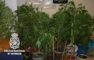 Plantación de marihuana decomisada en el Marítimo/cnp