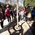 Los alumnos del colegio municipal de Benimaclet con su árbol y la edil Bernal/ayto vlc