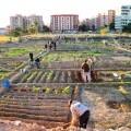 Los labradores de los huertos urbanos de Benimaclet/aavv benimaclet