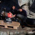 Tarta con arenques para celebrar el décimo aniversario de l'Oceanogràfic