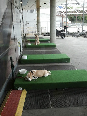 IKEA-dog-parking-lots-1 (1)