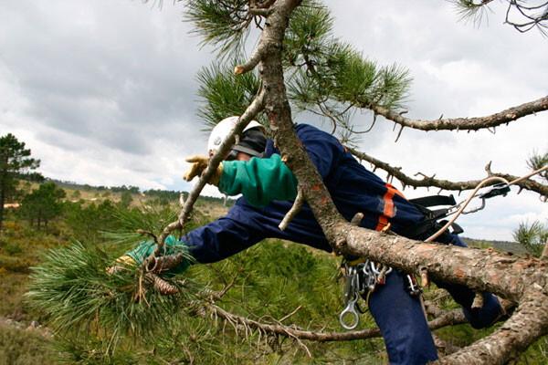 Técnico del CIEF trabajando en el monte