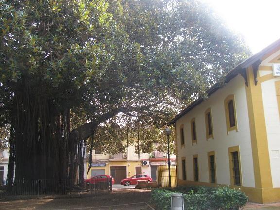 Jardín de las Camelias en el barrio de Ayora con el ficus protegido a la izquierda/aavv marítimo ayora