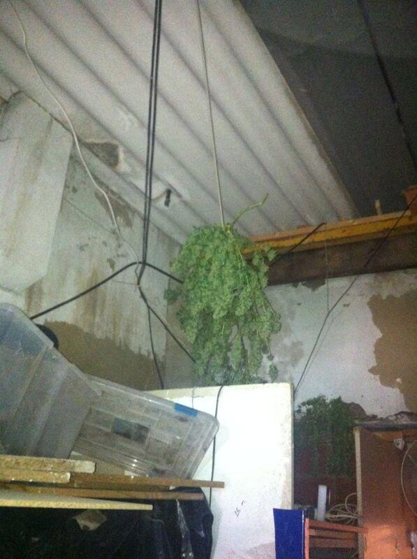 Vista interior donde estaba el criadero cuyo suministro eléctrico cogía de una farola/policía local