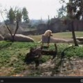 Los animales de Bioparc Valencia celebran el 5º aniversario del parque