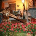El paso de la Crucifixión volverán a recorrer las calles del Canyamelar/hdad. crucifixión