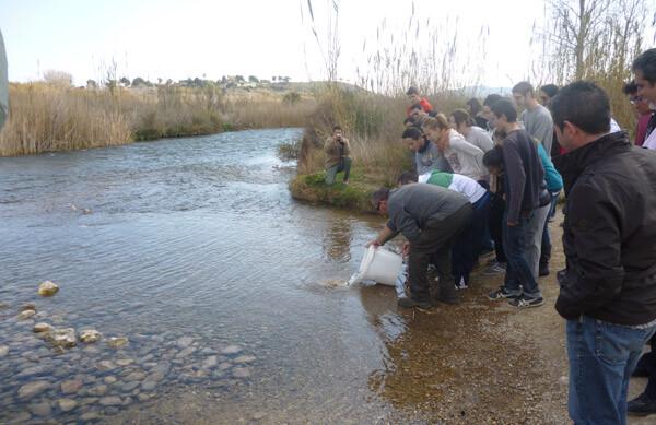 El objetivo es lograr que esta especie autóctona se distribuya por todo el río Turia