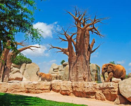 Bosque de Baobabs de Bioparc Valencia