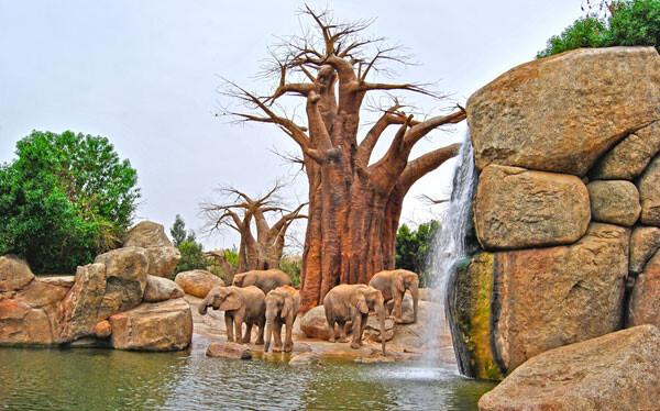 Elefantes en el lago. Bioparc Valencia