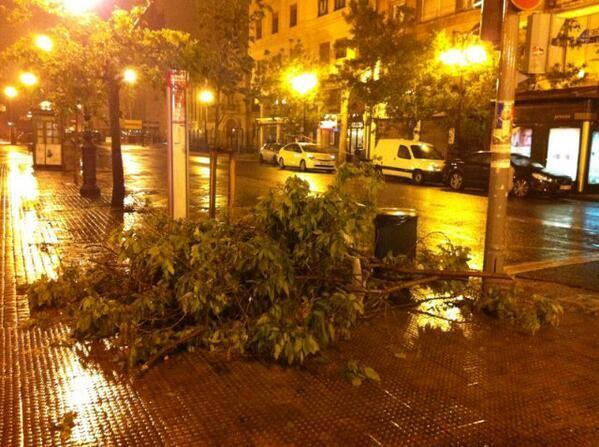 Una rama caída de un árbol por el temporal en la avenida del Oeste/Isaac Ferrera