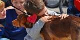 Bioparc Valencia - 2º desfile solidario de perros abandonados organizado por AUPA