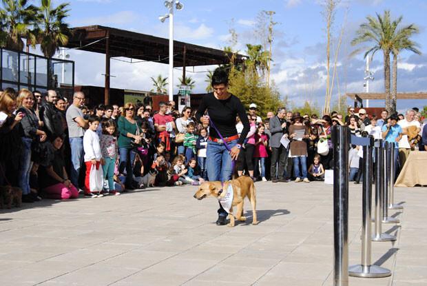 Desfile-de-perros-abandonados---Organizado-por-AUPA-y-Bioparc-Valencia