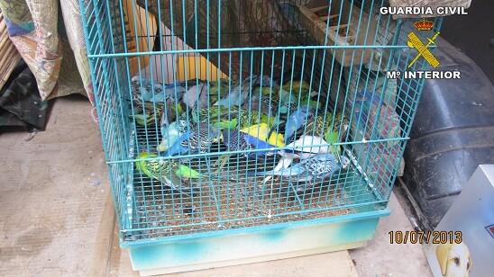 Los periquitos muertos en el interior de la jaula