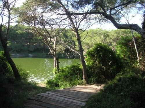 Lago de la Dehesa-Albufera por donde también se ha retirado ramaje/vlc